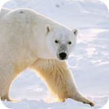 Voir les images Alaska Stock Images Libres de Droits