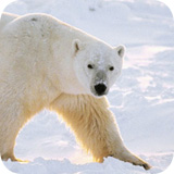 Bilder ansehen Alaska Stock Lizenzfreie Bilder